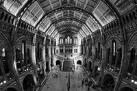 London Museum of Natural History Black and White
